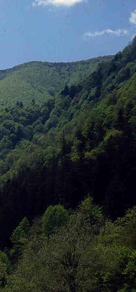 lama_foresta